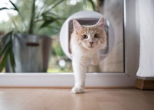 Cat-Flap-in-doors.jpg