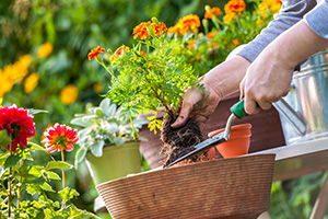 Gardeners & Garden Centres