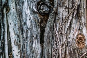 Tree-Thyme-Tree-Surgeons-2.jpg