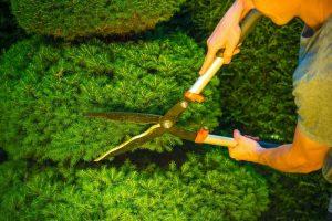 glasgow-trees-pruning-maintenance-2.jpg