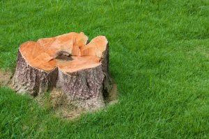 glasgow-trees-stump-grinding-removal-1_orig.jpg