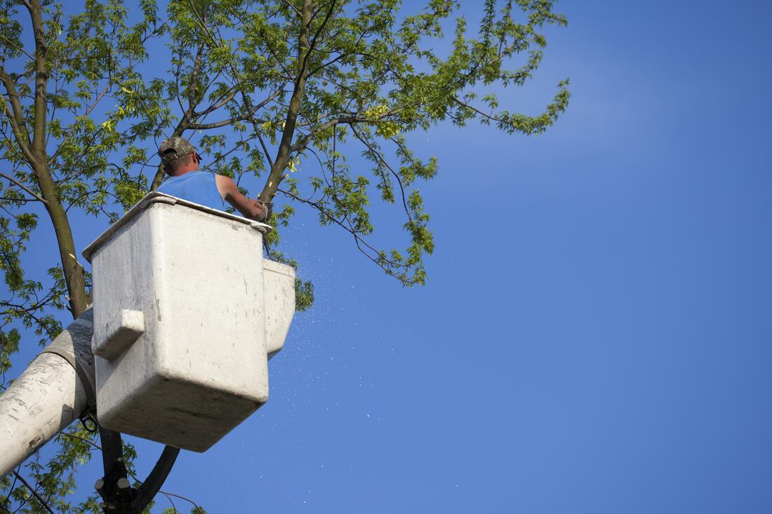 pueblo-tree-service-tree-trimming-and-pruning-2_orig.jpg